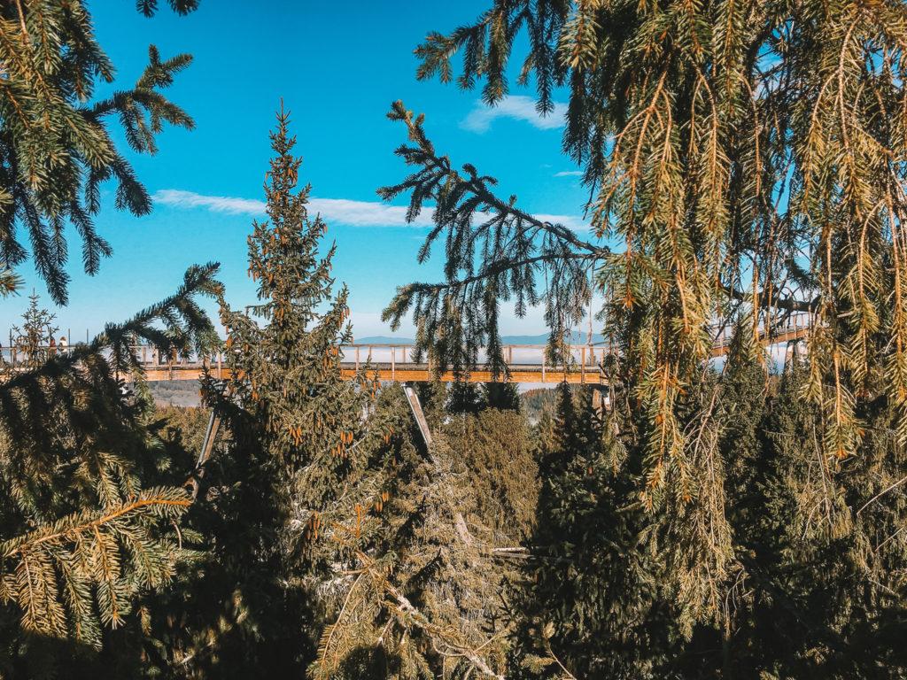 30countriesby30 - Ścieżka koronami drzew Bachledka